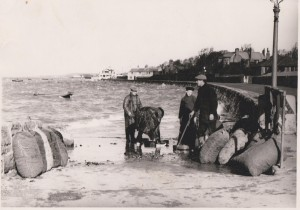 Bagging mussels, middle slip, circa 1930.